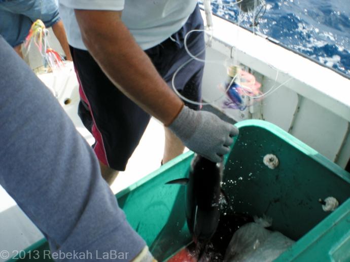 2013-04-14_Fishing-006