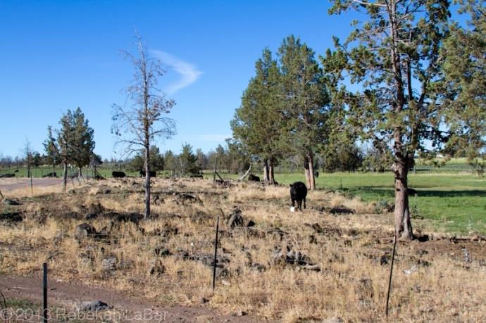 2013-07-28_Ranch-004