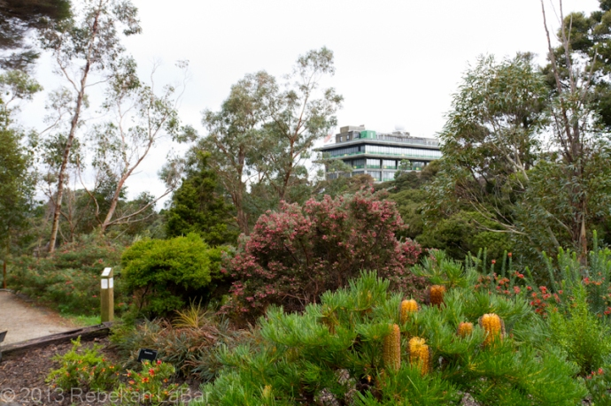 MetService, from the Australia Garden in the Wellington Botanic Garden